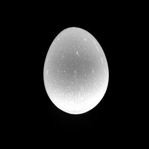 LF-150504-00003-4